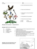 Food Web, Food Chain, Energy Pyramid, Water Cycle Practice