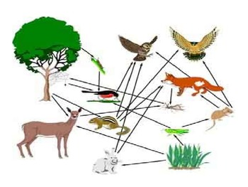 Food Web Food Chain PP