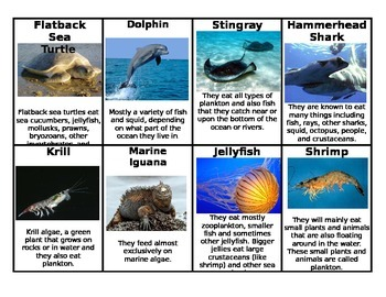 Food Web: Marine & Freshwater Comparison