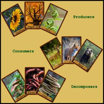 Food Web War (Card Game)