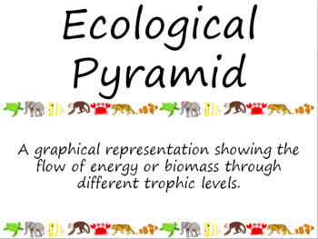 Ecology: Food Web Word Wall Vocabulary Cards