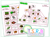 Food Web and Chain (In. Sample Answer Key)