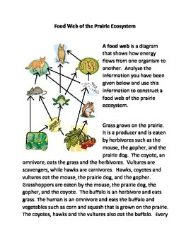 Food Web of the Prairie Ecosystem