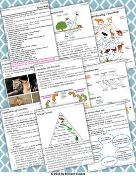 Food Web:Basics,Types,Applications,Energy Pyramid,Trophic levels,Parasite & Host