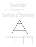 Food Webs & Ecological Pyramids