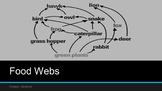 Food Webs & Energy Pyramids