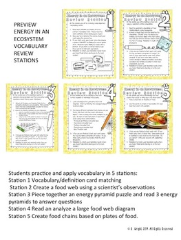 Food Webs, Food Chains, Energy in an Ecosystem Vocabulary Stations