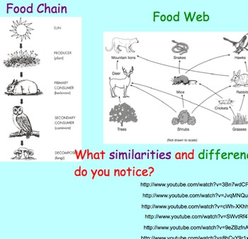 Food Webs - Lesson Presentations, Extensive & Fun Activities, Games