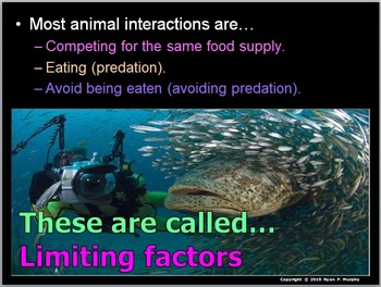 Food Web Lesson, Predator and Prey Cycles