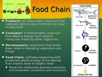 Food Webs and Energy Pyramids