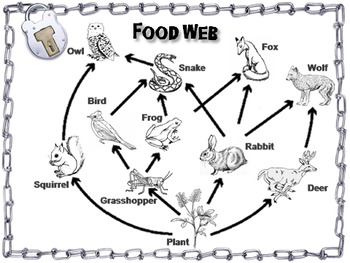 Food Webs and Food Chains Activity: Escape Room - Science (Ecosystems Unit)