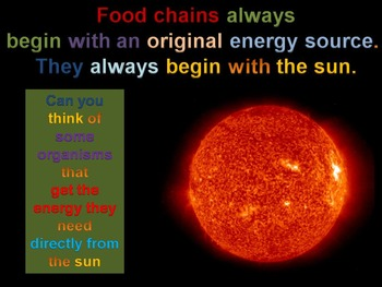 Food Webs and Food Chains with video links and lots of animations