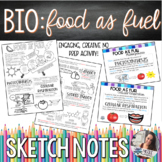 Food as Fuel Doodle Notes with PDF Slides