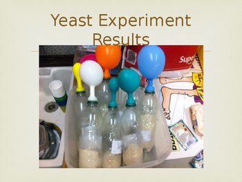 Food as Humans Fuel - Including Fun Experiment!