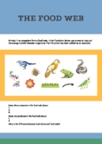 Food chain and ecological pyramid worksheet