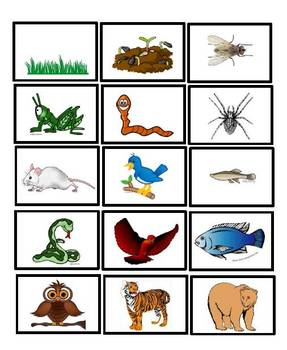 Food chain pictures