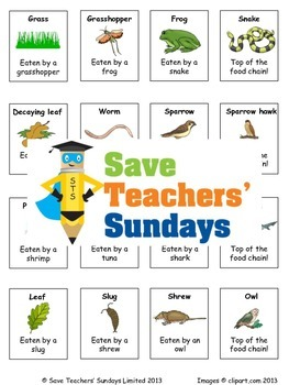 Food Chains Lesson Plan, Cards for Activity and Worksheet