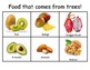 Food that comes from trees