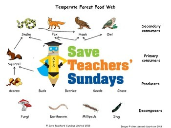 Food Web Lesson Plan and Worksheets