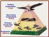Food webs, energy pyramid, ecology
