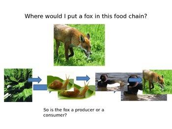 Foodchains