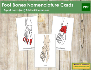 Foot Nomenclature Cards (Red)