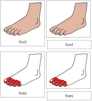 Foot Nomenclature (Simple) Cards (Red)
