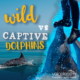 For Teachers | Captive v Wild - 10 Things You Didn't Know About Dolphins
