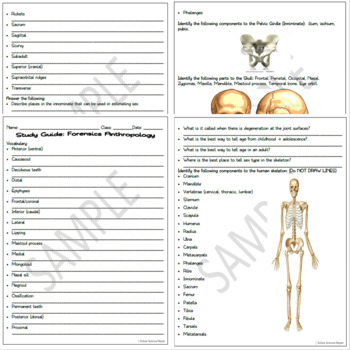 Forensic Anthropology Review Pack: 4 Page Study Guide, Justpardy Review Game