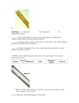 Forensics Hair Analysis Quiz
