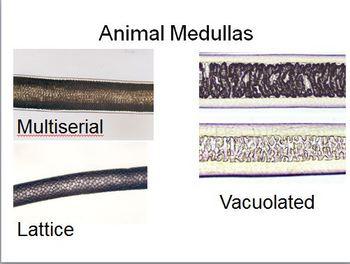 Forensics Hair Evidence Mini-unit