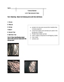 Forensics-Unit 6 Test-Hairs and Fibers
