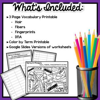 Forensics Worksheet: DNA, Fibers, Fingerprints & Hairs Vocabulary Assignment