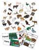 Forest Animal Bundle Pack
