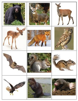 Forest Animal Picture Memory