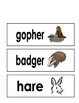 Forest Animal Vocabulary Cards