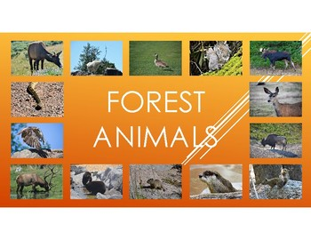 Forest Animals: Includes Pictures, diet, habitat, attributes, and babies.