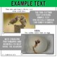 Forest Animals Non-Fiction Spanish Readers - El Búho  The Owl