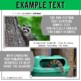 Forest Animals Non-Fiction Spanish Readers - El Mapache  T