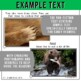 Forest Animals Non-Fiction Spanish Readers - El Oso  The Bear