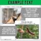 Forest Animals Non-Fiction Spanish Readers - La Ardilla  T