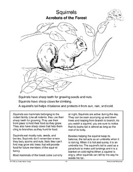 Forest Animals: Owls and Squirrels