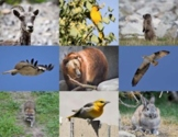 Forest Animals, Plants, and Land Formations: Pictures for