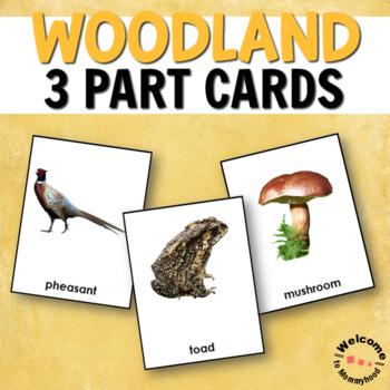 Forest Animals - Woodland Habitat 3 Part Cards