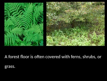 Forest Ecosystem Powerpoint