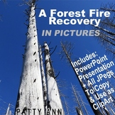 Clip Art Photos + PowerPoint of FOREST FIRE RECOVERY > 35 Photographs!