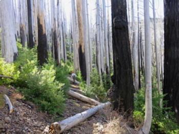 Clip Art 35 Jpeg Original Photos + Presentation of Oregon FOREST FIRE RECOVERY