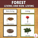 Forest Sorting Activity - Living and Non-living