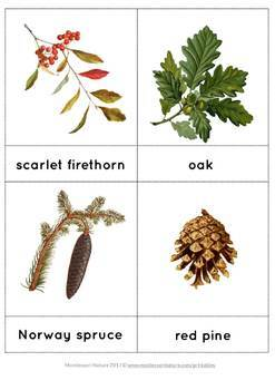 Forest Vocabulary Cards and Montessori 3-part Cards