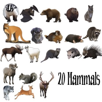 Forest Woodland Mountain Animals Realistic Clip Art